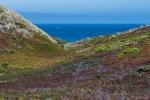 Photography, California, Coastal Landscapes, Ocean, Ice Plant, Nature, Fujifilm X-T2, Point Reyes, Mendocino
