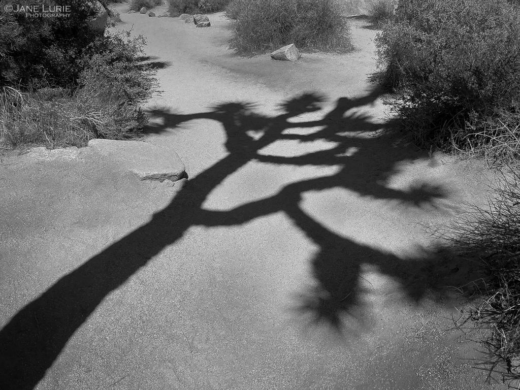 Botanic Shadows