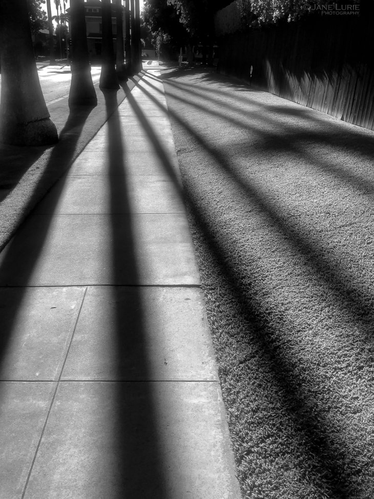 Nature, Black and White, Monochrome, Flowers, Shadows, Trees, Palms, Photography, iPhone,